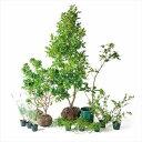 園藝 - オンリーワン 香で選ぶ 植栽セット フレグラント ポートワイン 5感で選べるセット KJ6-SET03