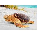 FRP 産卵場所を探すアカウミガメ / Loggerhead Turtle 『亀オブジェ アニマルオブジェ 店舗・イベント向け』