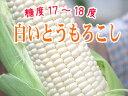 白いとうもろこし【ピュアホワイト】北海道産直!朝も