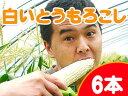 白いとうもろこし【ピュアホワイト】北海道産直!朝もぎ、とうきび【6本】限定販売!生でも美味しいフルーツトウモロコシ♪産地直送トウキビ!※送料無料※収穫出来次第、順次発送予定