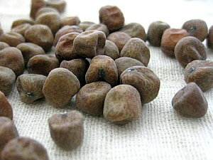 赤えんどう豆1kg≪北海道十勝帯広産≫の紹介画像2