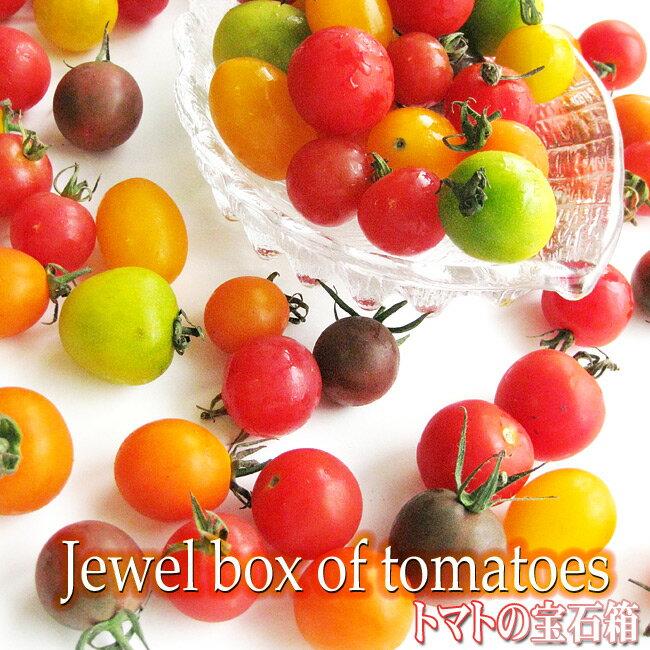 カラフルミニトマト1kg【北海道産トマトの宝石箱】甘いとまと 北海道の美味しくレアなトマトの詰合せ