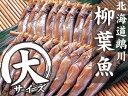 北海道鵡川産ししゃもC特大サイズ【雄10尾・雌10尾】北海道...