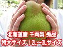 北海道産 千両梨 秀品 特大サイズ!2L〜3Lサイズ 5玉