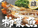 本ししゃもオス30尾【北海道産本柳葉魚】脂がのり身の引締った雄のシシャモ 北海道の特産種の本シシャモ【簡単調理】海鮮ギフト 御中元や御歳暮等贈り物にも【本物をご家庭で召し上がって下さい】通好みのおすししゃも