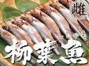本ししゃもメス30尾【北海道産本柳葉魚】卵を抱えた雌の子持ち...