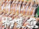 本ししゃも60尾 夫婦シシャモ【北海道産本柳葉魚】脂がのり身...