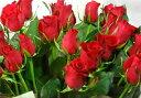 フリー バラの花 画像