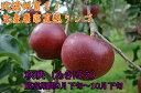 【送料無料】信州で誕生した甘さと酸味のバランスがGoodなりんご!「訳ありりんご」秋映 自家用ランク約5kg(12〜18玉)