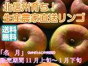 【送料無料】フルーティーな甘味が特徴的で食べやすい!人気の黄色種りんご「名月」中級ランク 約10kg(20〜36玉)
