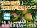 【送料無料】【訳ありリンゴ】フルーティーな甘味が特徴的で食べやすい!人気の黄色種りんご「名月」自家用ランク 約5kg(10〜20玉)
