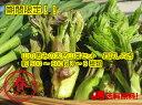 【送料無料】信州の春の味覚! 旬の特産!天然山菜 約500g以上3〜6種類 10〜20人前のてんぷらができます!