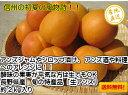 【送料無料】生食やコンポート、シロップ漬けなどの加工品にも最適な「長野県産 生アンズ 約2kg箱」