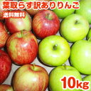 【16日までポイント5倍】りんご 訳あり 10kg 送料無料 40玉前後 令和2年度 青森県産 葉取
