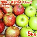 りんご 訳あり 5kg 送料無料 20玉前後 令和2年度 青森県産 葉取らずりんご 蜜入り お得用
