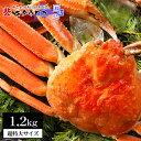 【送料無料】 カニのキタウロコ ずわいがに 姿 ボイル 1.2kg 1尾入 かに カニ 蟹 ズワイガニ ギフト 高級 記...