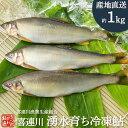 冷凍鮎 1kg 栃木県 喜連川 湧水育ち 鮎 小分け 魚 焼き魚 焼魚 川魚 バーベキュー キャンプ