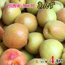 ご予約受付中 加工用 あんず アプリコット 減農薬 長野県産 小布施 送料無料 約4キロ