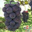 訳あり 種無し 完熟 巨峰 ぶどう 長野県産 約2キロ