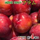冷凍 シャーベット プラム すもも 長野県産 4キロ ※解凍NG