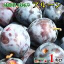 7月下旬発送 朝どれ生プルーン 減農薬 長野県産 1キロ レビューを書いたら200円クーポン