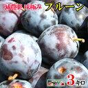 7月下旬発送 朝どれ 生プルーン 減農薬 長野県産 3キロ レビューを書いたら200円クーポン