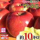 スマートフレッシュ 訳あり 葉とらず 味極み りんご 減農薬 長野県産 産地直送 約10キロ