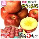 特選 贈答用 蜜入り サンふじ りんご 減農薬 長野県産 5キロ