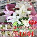 【送料無料フラワー】ユリの花束【誕生日・お祝い・記念日・出産祝い・開店・開業】【敬老の日】