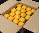 種が無くて食べやすい秋の味覚「たねなし柿」をたっぷり7.5kg【1008secret51】