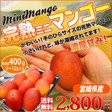宮崎県産 完熟 マンゴ ミニマンゴー 送料無料 かわいい大きさの手のひらサイズ この大きさでも完熟マンゴーです。小さくてかわいい訳あり