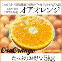 【送料無料】イスラエルから初上陸!本気でうまい新柑橘「オアオレンジ(オラオレンジ)」5kg