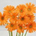 ガーベラ 5本 切花 生花 切り花 造花ではありません お色おまかせ