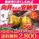 安納芋 種子島産 送料無料 訳あり 無選別 5kg さつまいも 焼き芋 はもちろん干し芋にも 向井さんのあんのういも サツマイモ