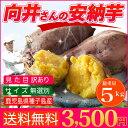 安納芋 種子島産 送料無料 訳あり 無選別 5kg さつまい...