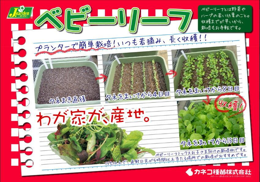 【J.ガーデン】ベビーリーフ 12種類からのア...の紹介画像3