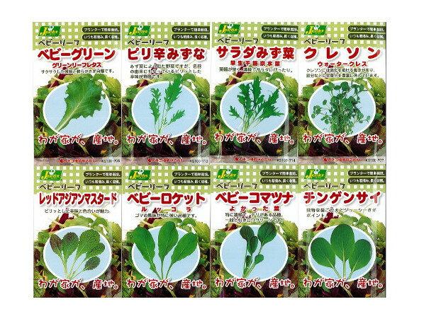 【J.ガーデン】ベビーリーフ 12種類からのアソート【カネコ種苗】