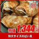 超ビックな巻き貝!生冷凍 ばい貝1kg「ゴルフボールの大きさ」【限定商品】