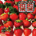 ショッピングビタミン dhc 直販 ギフト おいCベリー 苺 いちご イチゴ 4パック 48個 約1.6kg (1パック 12個入り) 晴れの国 岡山 strawberry 取り寄せ 産地直送 収穫後即発送 土耕栽培