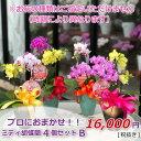 ミディ胡蝶蘭 4個セット 4株 B 寄せ植えP1239