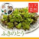 天然山菜ふきのとう 500g(採取者・笑顔の里)天然物/天然ふきのとう/天然フキノトウ/天然蕗のとう