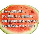 【12月中旬発送 送料無料】沖縄県今帰仁産スイカ1...