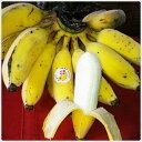 【送料無料】琉球もちっ娘3kg【沖縄県産 沖縄産 島バナナ バナナ ブランド】
