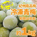 【冷凍便】紀州南高梅 冷凍青梅 特選品 約1kg(大玉2L?4L) 産地直送 和歌山 取り寄せ シロ