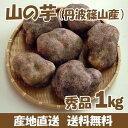 【送料無料】山の芋(丹波篠山産) 秀品1kg(3〜4個) 箱入り 取り寄せ 産地直送 ヤマノイモ やまのいも 山芋
