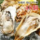 坂越産 殻付き 牡蠣 48個 生食用【 牡蛎 牡蠣 かき カ