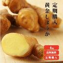 定期購入【送料無料】 高知県産 黄金生姜 4kg