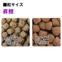♭日本動物薬品 昇鯉 幼鯉用 中粒 浮 10kg×2袋送料無料代引不可 同梱不可【♭】