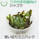 【テラリウム コケリウム 苔 コケ 苔テラリウム 苔リウム ...