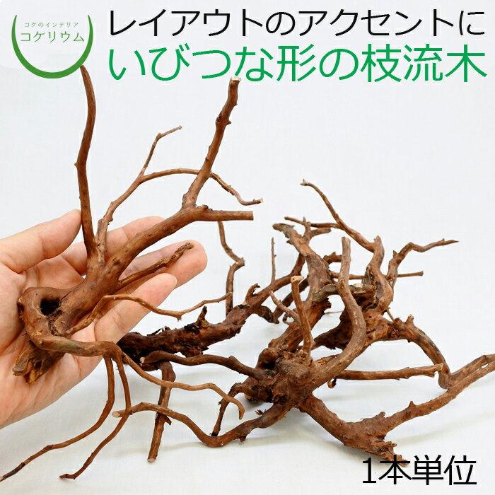 テラリウム流木インテリアコケリウム苔コケ苔テラリウム苔リウムアクアリウムアクアテラリウム観葉植物園芸